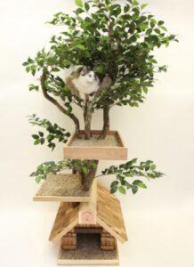 Árboles para gatos:
