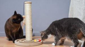 Rascadores para gatos de diferentes alturas y texturas